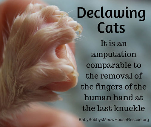 Declawing Cats is Actually an Amputation Photo Image
