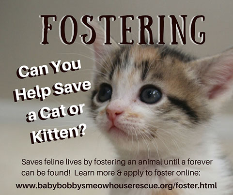 Fostering a cat or kitten until a permanent home can be found helps to save feline lives (photo).