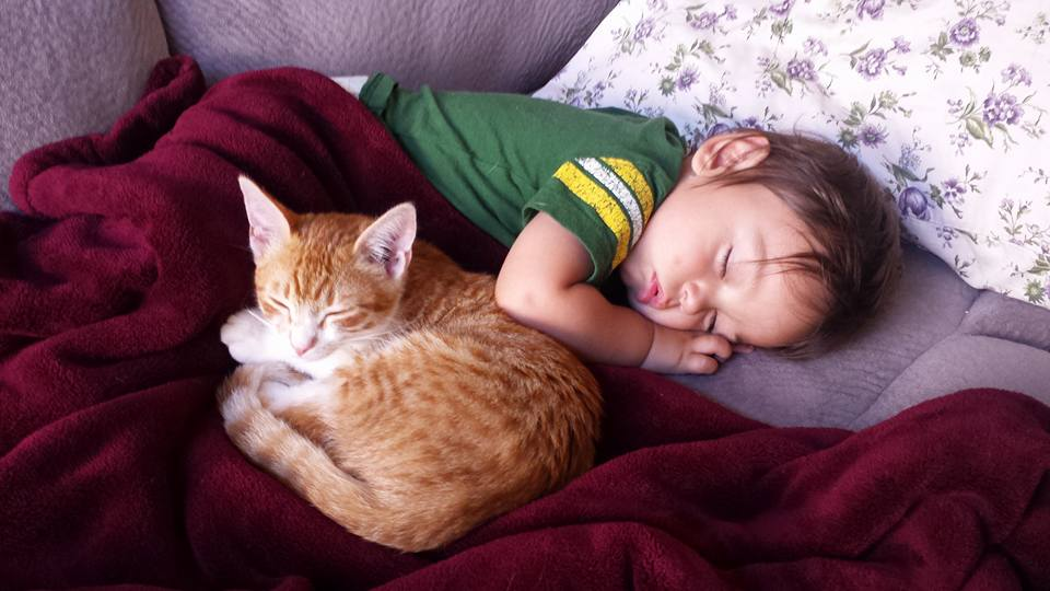 Sleeping toddler and rescue kitten taking nap together