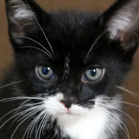 Support BBMHRescue Cat Fundraiser Donations Kitten Photo